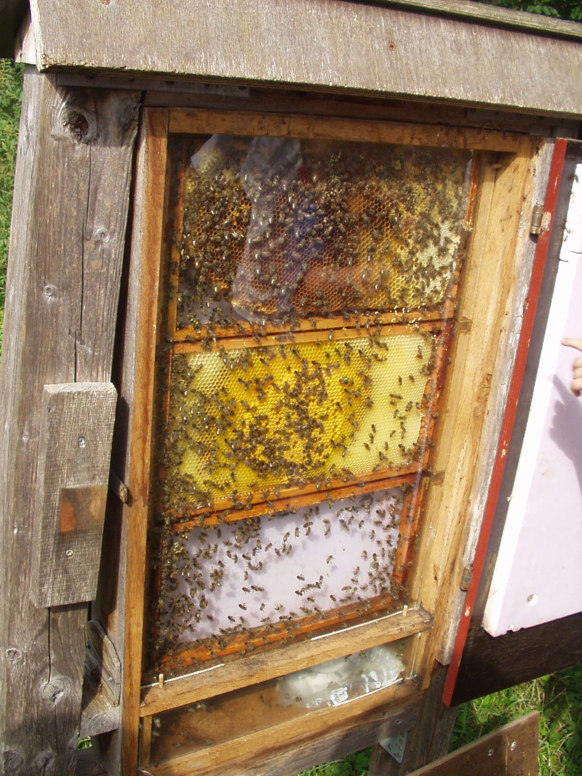 Einblick in Bienenstock